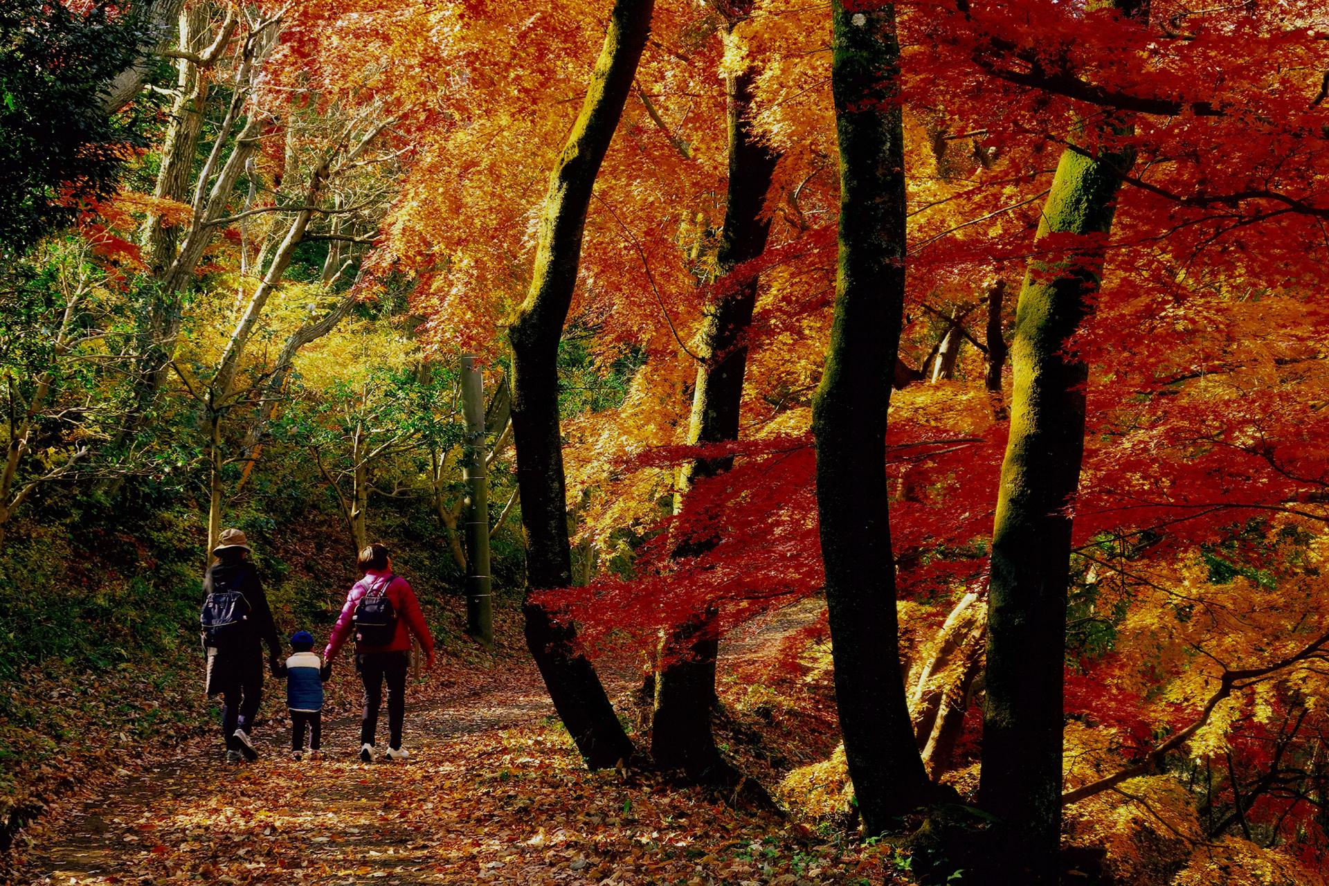 23-1 ビギナーにもおすすめ!日帰りでも楽しめる関東の絶景登山・ハイキングスポット10選